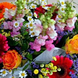 Country Flower Mix