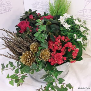 Christmas Mix Planted Container